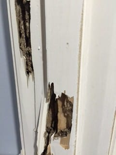 Termite Damage To Door
