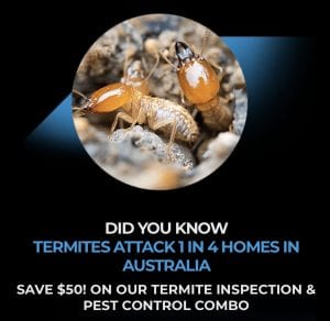 Termite Inspection & Pest Control Gold Coast