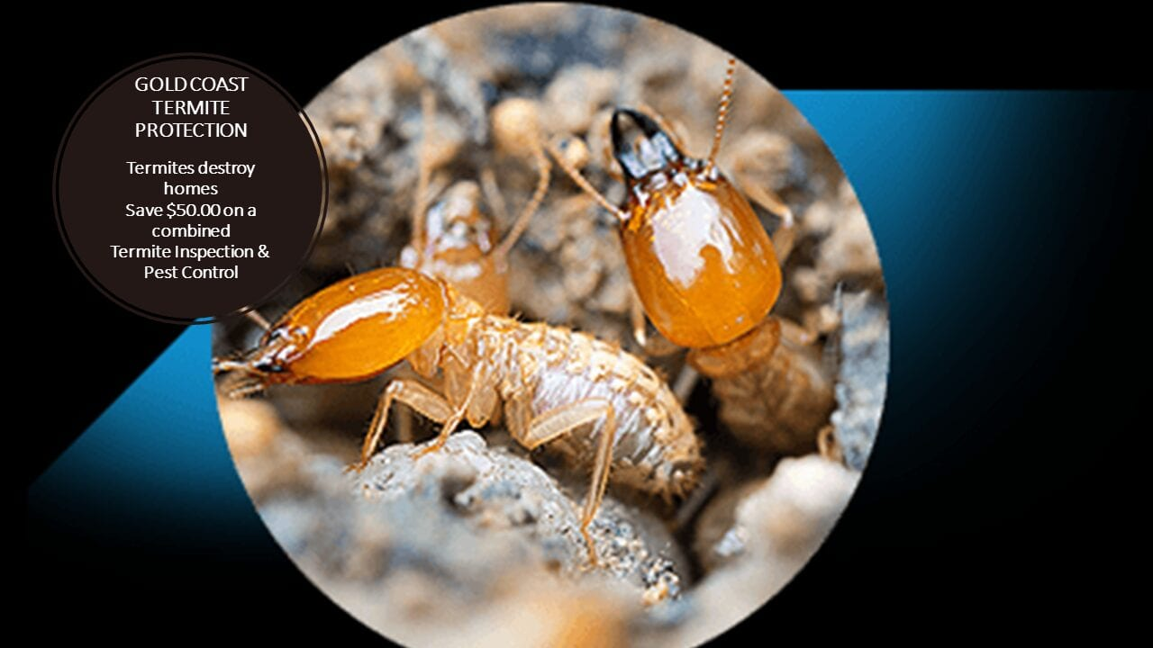 Gold Coast Protection Termite & Pest Control Offer